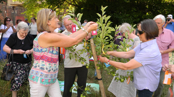 Action Mesothelioma Day – Tree-planting Event